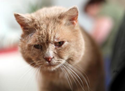 Сумний кіт