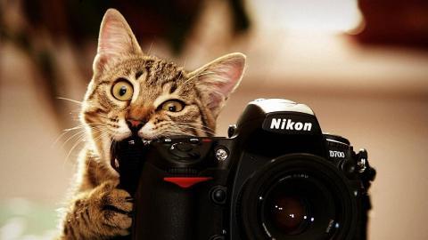 кіт фотограф